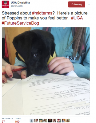 @UGAAbility tweeted: Stressed about #midterms? Here's a picture of Poppins to make you feel better. #UGA #FutureServiceDog